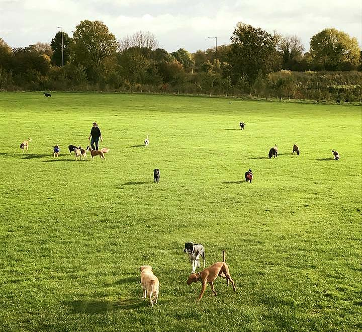 walls4paws-dogs-open-field-1